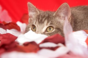 Kitten with rose petals