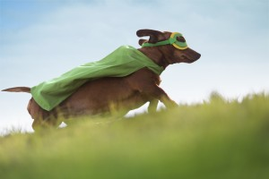 Superhero dog running up hill