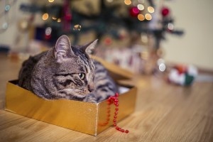 Cat as a present