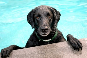 Water Safety Tips for Dogs are real.