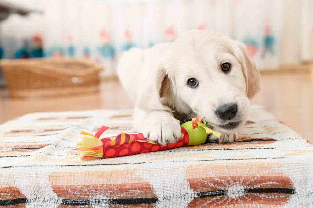 indoor activities for dogs