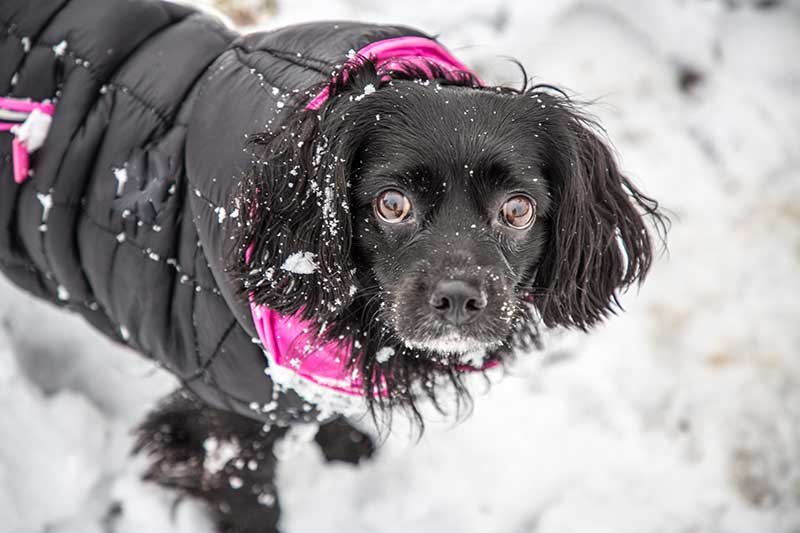 Keeping Keeping Your Pet Warm This Winter is part of responsible pet care and pet safety