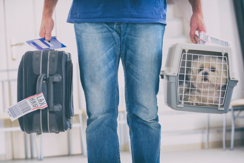 Traveling with a special needs pet requires special pet travel plans
